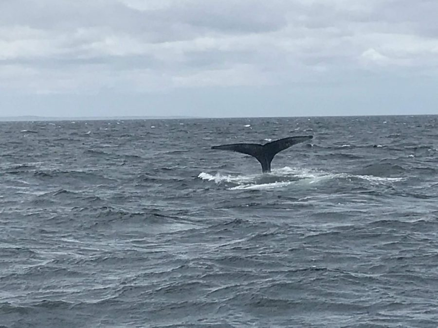 Eighth Graders Enjoy Annual Whale Watching Trip