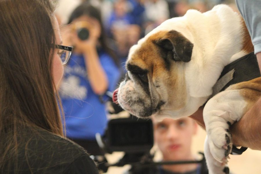 Ms. F gets ready to kiss the bulldog.